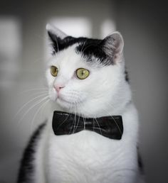 """You told me I was gonna eat a """"fancy feast"""", yet you're looking at me as if I'm over dressed."""