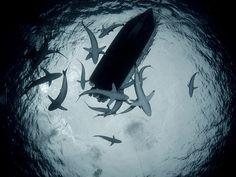 sharks under boat