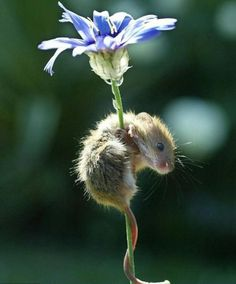 Beauty & the Beasts: 20 Animals Who Love Flowers