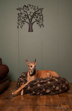 "The CuddleBed Xtra Large by HopeSpringsPetBeds, $129.00. The CuddleBed is a high quality, very thick, and exceptionally soft bed which is perfectly suited for the pet that enjoys ""nesting"" or digging their way into a comfy spot when lying down to sleep."