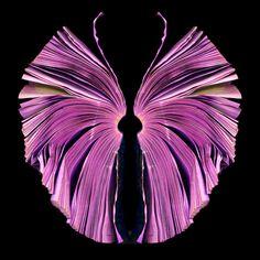 pink butterfly book art by Cara Barer