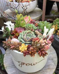Beauty Succulents Pots Arrangement Tips 44 image is part of 80 Mini Succulents Pots Arrangement Tips to Make It More Beauty gallery, you can read and see another amazing image 80 Mini Succulents Pots Arrangement Tips to Make It More Beauty on website Different Types Of Succulents, Types Of Succulents Plants, Growing Succulents, Succulents In Containers, Cacti And Succulents, Planting Succulents, Cactus Plants, Planting Flowers, Succulent Gardening