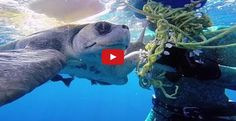 What A Diver Did For This Desperate Turtle Is Amazing. The Turtle's Reaction Gave Me CHILLS.
