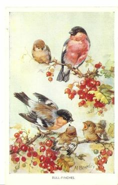 M Bowley - Three Old Artist Drawn cards of Birds