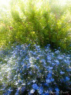 Blüten, die nur von Luft und Liebe leben. Teil 2: Der Staudenlein.
