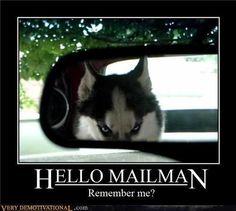 Image detail for -Devil Dog (husky,motivational,dog,funny,humor,scary)