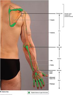 Surface anatomy landmarks of the thorax | Teach It | Pinterest ...