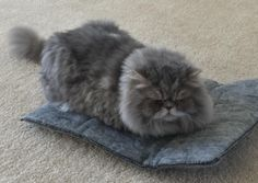 This napping pad that traps hair, dander, and helps your cat retain their heat. | 25 Insanely Affordable Products Every Cat Owner Will Want