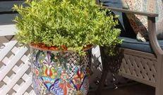 La Fuente Imports - Colorado Springs, CO, US Talavera Pottery, Colorado Springs, Plants, Decor, Viva Mexico, Decoration, Plant, Decorating, Planets