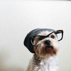 Art On Sun: ♥ dog ♥