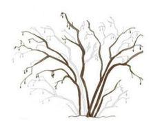 Mogyoró termesztése, metszése - gazigazito.hu Abstract, Artwork, Plants, Summary, Work Of Art, Auguste Rodin Artwork, Artworks, Plant, Illustrators