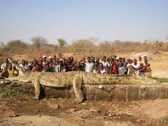 """22 foot, 2500 pound crocodile killed by the Army in Zimbabwe after villagers were """"disappearing"""""""