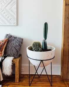 "11.4 k mentions J'aime, 194 commentaires - west elm (@westelm) sur Instagram : ""Loving this little cactus garden that @beilersinlove has going. 🌵🌵🌵 Shop that planter with the link…"""