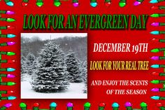look for an evergreen day - Google Search