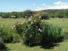 Rosas en Cabañas Ichacuna.