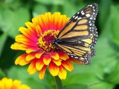 Every positive thing in your life represents a single unique blessing. Every negative thing in your life has the opportunity to become a double blessing. For when you turn a negative into a positive,. How To Become, Butterfly, Positivity, Awesome, Garden, Plants, Life, Blessing, Corner