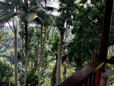 Lunch with a view - Como Shambala, Ubud
