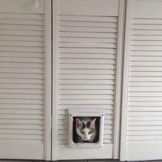 Cat door leading to litter box