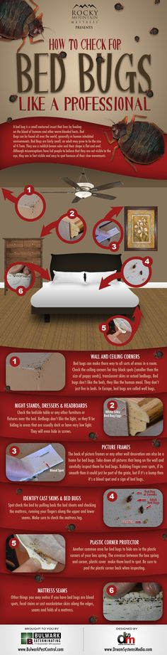 How To Check For Bed Bugs Graphic by Rocky Mountain Mattress - a must for the traveler; you don't want to bring these home in your suitcase!!!