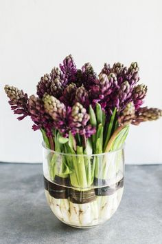 Hyacinths at Winston Flowers, Gardenista~ so lovely! Dunn Noel Watkins C, My Flower, Fresh Flowers, Spring Flowers, Beautiful Flowers, Purple Flowers, Winston Flowers, Deco Floral, House Plants, Planting Flowers