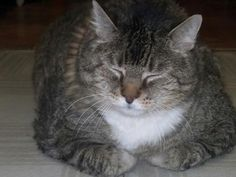 Basil The Tabby | Pet Expenses - YouCaring.com
