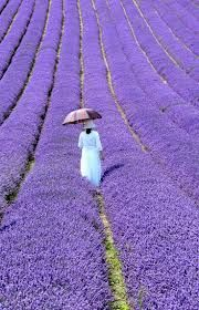 Provence, France ~dreamy, gah!!!!!!!