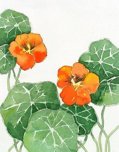 Flower painting Watercolor Painting Print nasturtiums by LaBerge