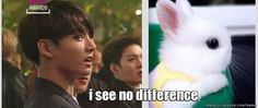 KookieBunny [ not the best comparison picture, but cant u see how cute this bunny is, i mean kookie is ] | allkpop Meme Center