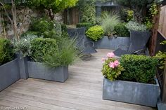 Galvanized planters with plants