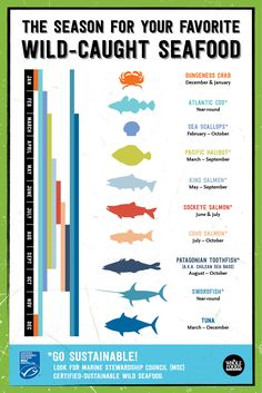 Do you love wild-caught seafood? This shows you when you're favorite fish is in-season. From salmon Fish Recipes, Seafood Recipes, Salmon Recipes, Recipies, Pacific Halibut, Alaska Salmon Fishing, Atlantic Cod, King Salmon, Sustainable Seafood