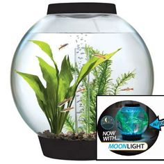 Spiffy Pet Products: Biorb Aquarium Kit With Light Fixture