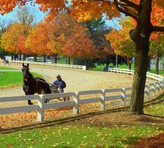 Jogging a race horse in the fall at the Wayne County Fairgrounds Wooster, Ohio. An interesting note: the race track is older than the fairgrounds & was the reason the fair wound up being there. Wooster Ohio, Long Lost Love, My Ohio, Wayne County, Horse Photos, Lombok, Places Of Interest