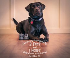 Ideas Baby Shoes Photography Pregnancy Announcements For 2019 Cute Pregnancy Announcement, Birth Announcement Boy, Pregnancy Photos, Baby Announcements, Maternity Pictures, Baby Pictures, Facebook Dog, Baby Due Date Calendar, Baby L