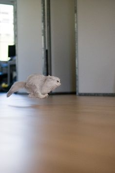 Get out of the way.......litter box here I come!