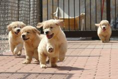They look like fluffy little fur balls!