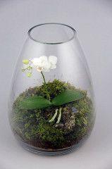 Orchid Terrarium - simple and pretty Large Terrarium, Orchid Terrarium, Terrarium Plants, Succulent Terrarium, Orchid Show, Orchid Care, Water Plants Indoor, Orchid Arrangements, Little Gardens