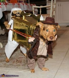 Truc: Our dog Cody is playing a dual role this Halloween. He is both Indiana Jones and Sallah carrying the Ark from Raiders of the Lost Ark.