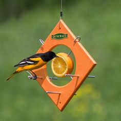 """Duncraft Oriole Fruit Locker Feeder: Slice open an orange on both ends to invite orioles to feed from both sides when perched on this easy to use fruit feeder. Slide out both skewers a little and spear the exposed fruit before aligning the end of the skewer into the hole, located on the bottom inside of the circle. Repeat with the second skewer to """"lock"""" the fruit into place."""