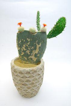 Brasilicactus haselbergii from qusamura.com