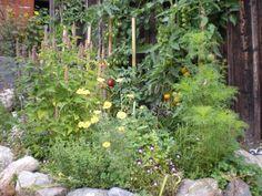 CUISINE SAUVAGE Recettes de cuisine avec des plantes sauvages
