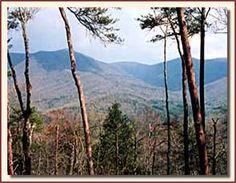 Blue Ridge Ga (our honeymoon)