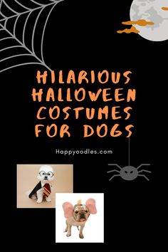 Check out these hilarious Halloween costumes for Dogs. We have updated the list for Halloween 2020 to include even more hilarious Halloween costumes for dogs. (#halloweencostumesfordogs, #costumesfordogs, #costumeforyourdog) Epic Halloween Costumes, Halloween Parade, Diy Dog Costumes, Holiday Costumes, Halloween Quotes, Halloween 2020, Easy Halloween, Halloween Themes, Happy Fall Y'all