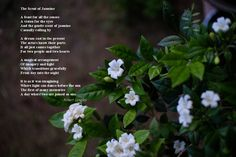 The scent of jasmine is a poem about a wedding in Tuscany Poems About Life, Inspirational Poems, Poetry Books, Jasmine, It Cast, Memories, Tuscany, Wedding, Memoirs