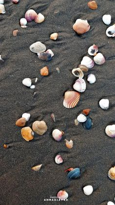 Seashore wallpaper by JavadAhmadd - 50 - Free on ZEDGE™ Stone Wallpaper, Beach Wallpaper, Nature Wallpaper, Mobile Wallpaper, Whatsapp Wallpapers Hd, Ios Wallpapers, Flower Background Wallpaper, Flower Backgrounds, Cute Images For Dp