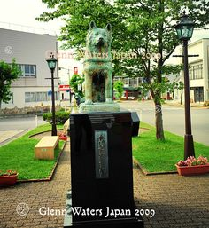 Hachiko in Odate Japan Dog Stories, True Stories, Hachiko Statue, Joan Allen, A Dog's Tale, Akita Dog, Japanese Film, Richard Gere, Man And Dog