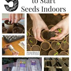 5 Ways to Start Seeds Indoors and tips for starting seedlings. Includes 5 ways to save money by making your own seed starters from recycled materials. How To Grow Cherries, How To Grow Watermelon, Growing Rhubarb, Growing Blueberries, Growing Parsnips, Growing Carrots, Growing Artichokes, Grow Asparagus, Growing Cherry Tomatoes