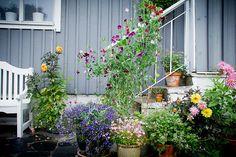 Lotta's garden in Sweden--click for more photos of this garden