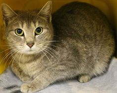 Intake: 3/20 Available: 3/26 NAME: Circle  ANIMAL ID: 25209712 BREED: DSH  SEX: Female  EST. AGE: 1 yr  Est Weight: 5.0 lbs  Health:  Temperament: Friendly  ADDITIONAL INFO:  RESCUE PULL FEE: $39