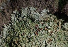 Zuzmós kő - Természetfotók a Mátrából.  Lichen on a stone - from the Mátra Mountains, Hungary at summer. #lichen #stone #forest #nature #photography #plants #vegetation