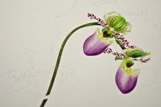 Eunike Nugroho: Botanical